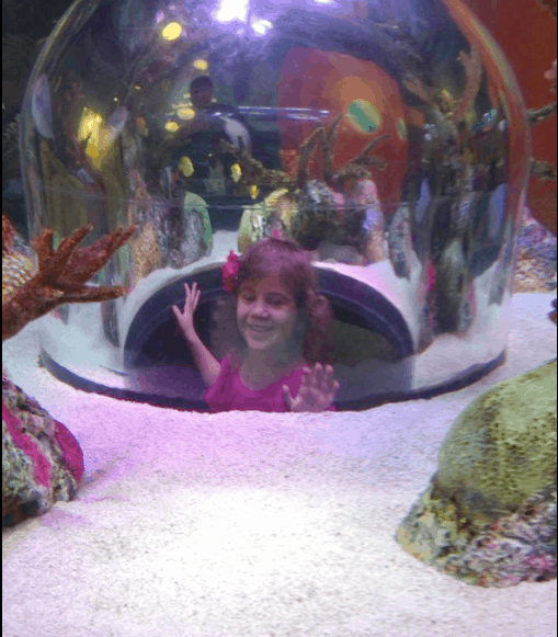 Things To Do In Kansas City Legoland And Sea Life